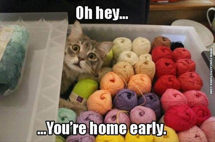Cat in yarn box - Oh, hey... You're home early