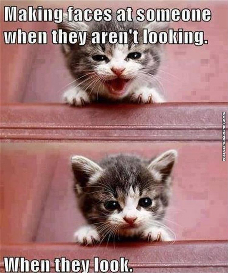 funny cat pictures my face when youre looking