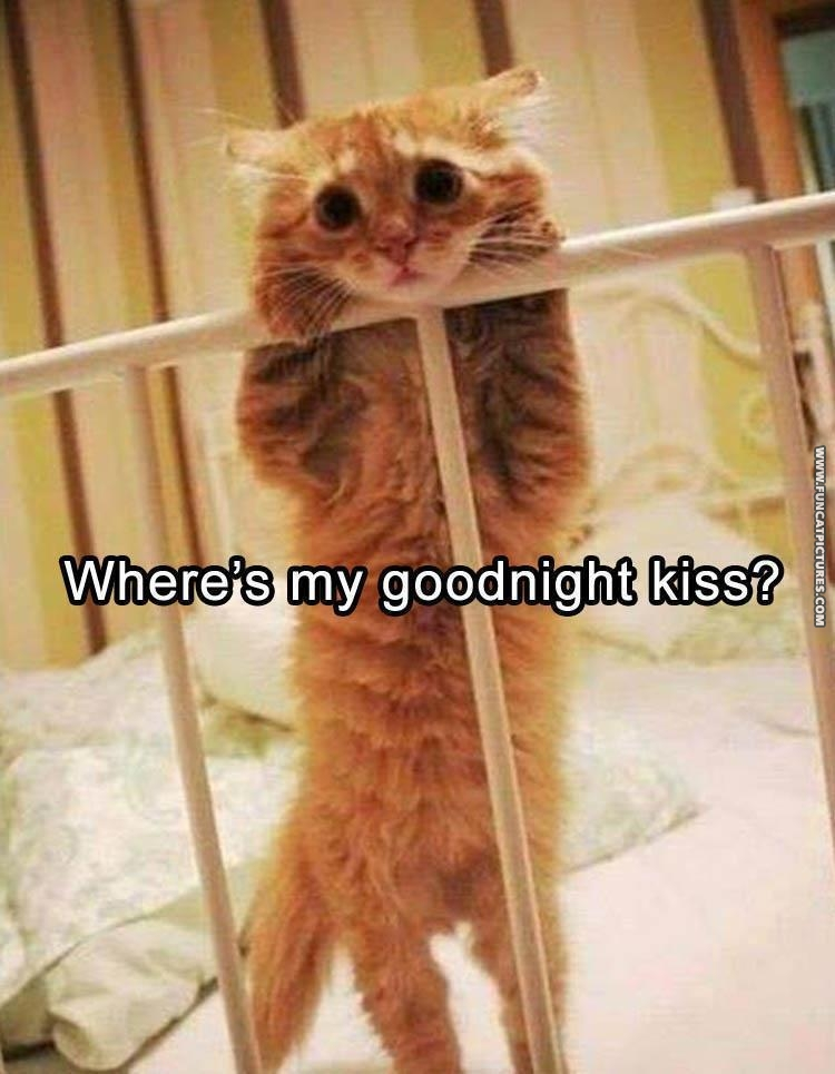 funny cat pictures good night kiss