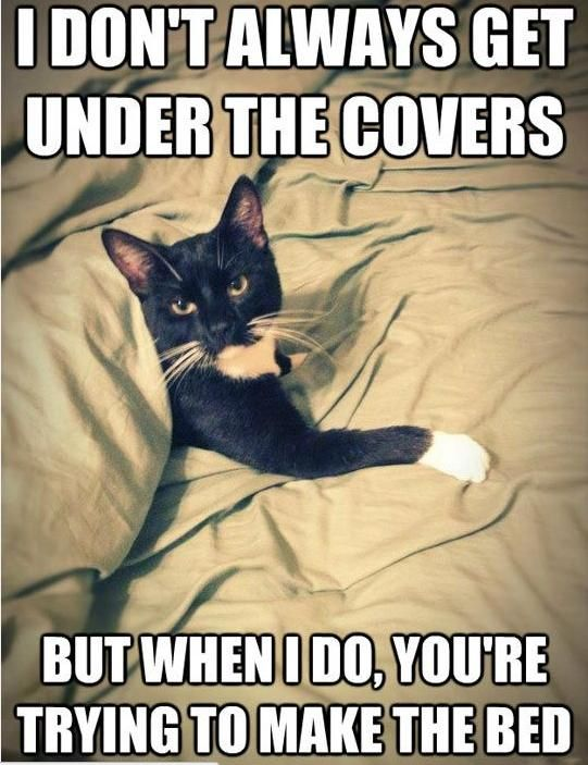 Cat under the cover in bed