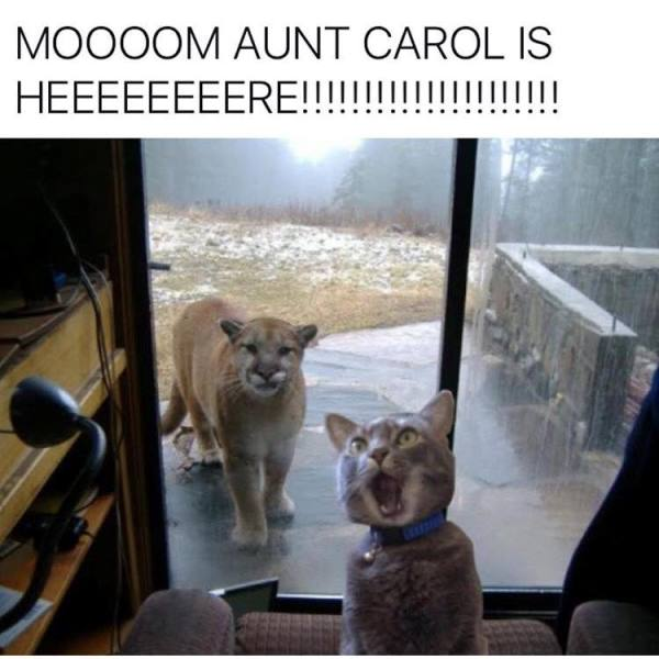 Cat with cougar outside window