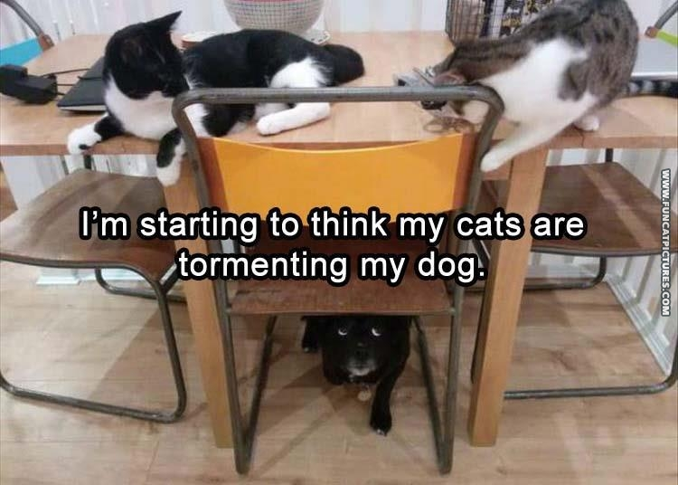 Two cats on top of table with dog under