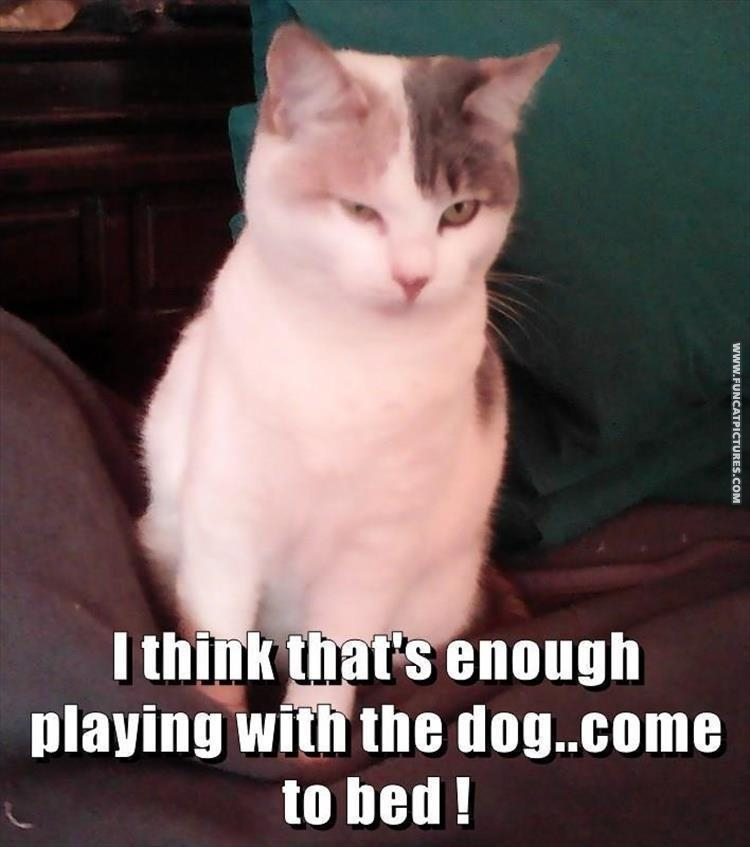 Cats can be so jealous…