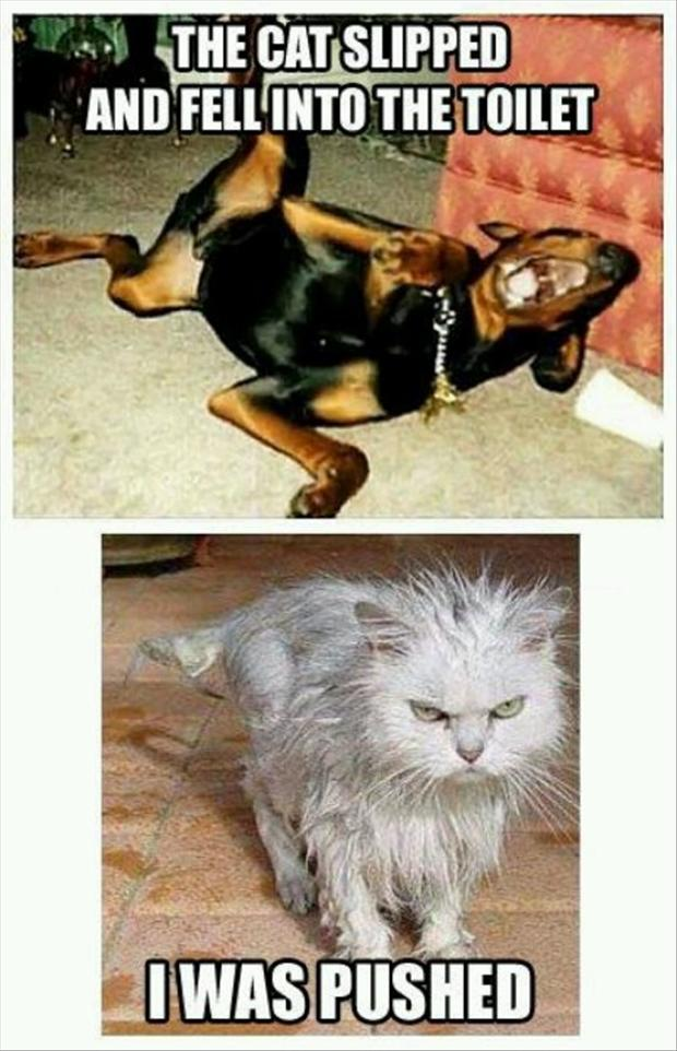Dog laughing at wet cat