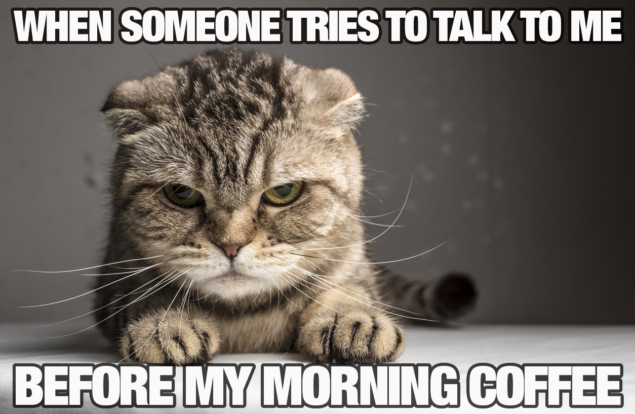 Annoyed cat before morning coffee