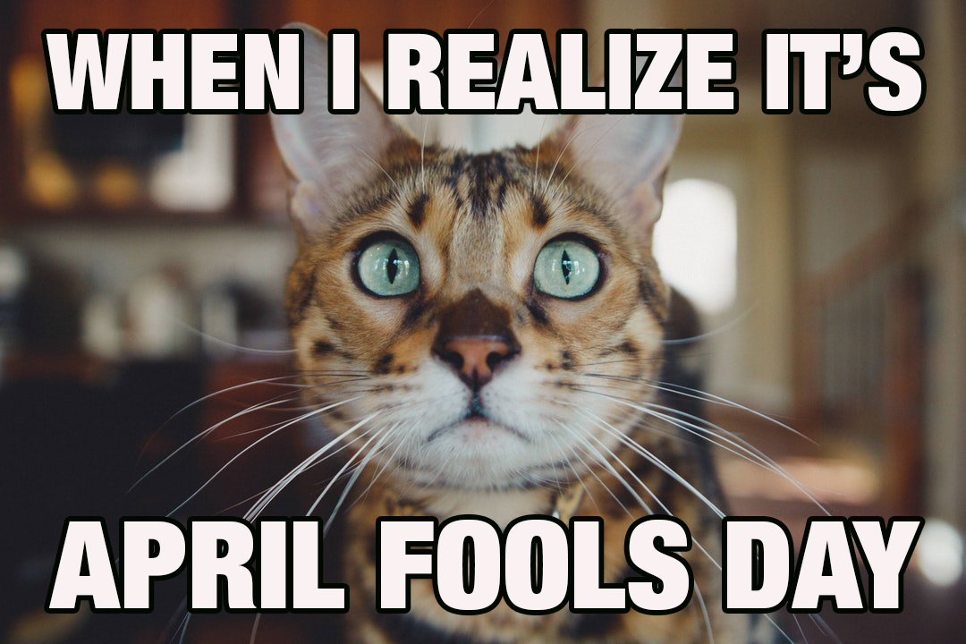 offended cat on april fools day