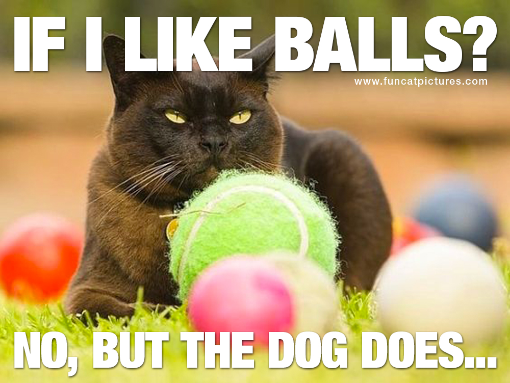 Cat with many balls