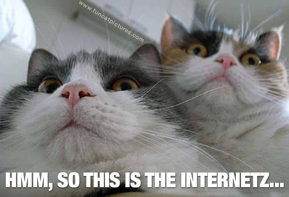 Double chin cats