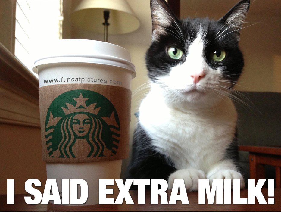 Cat with Starbucks cup