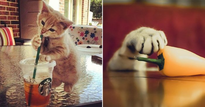 25 pictures proving that cats are master thieves