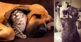 20 wonderful pictures of cats who really love their dog friends!