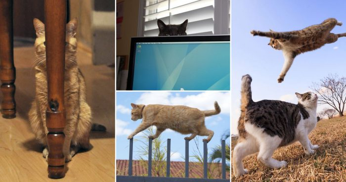 25 funny pictures proving that cats are ninjas!