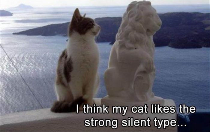 Every cat has its type