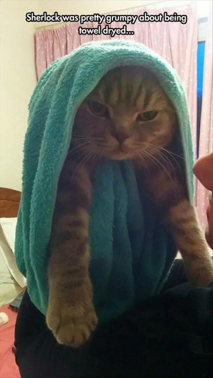 How not to towel dry your cat