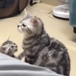 VIDEO: This cat have forgotten that they have children and they will soon regret it!
