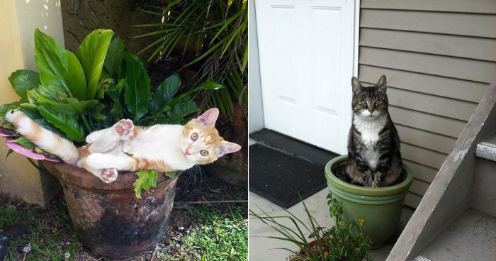Nineteen cat plants you probably shouldn't water