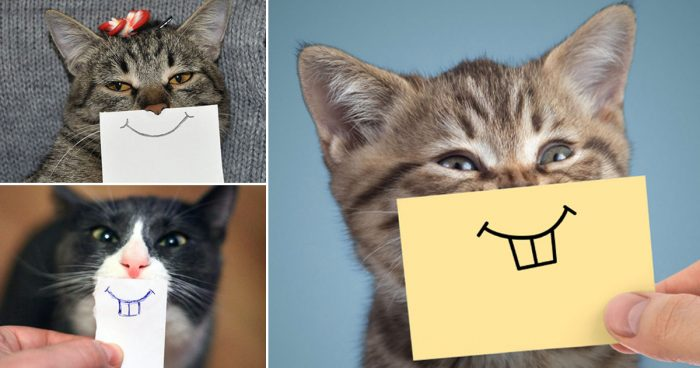 20 funny pictures of cats with cartoon facial expressions that will make your day!