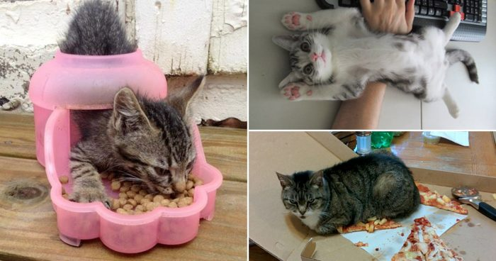 19 lovely pictures to prove that cats usually does whatever they want!