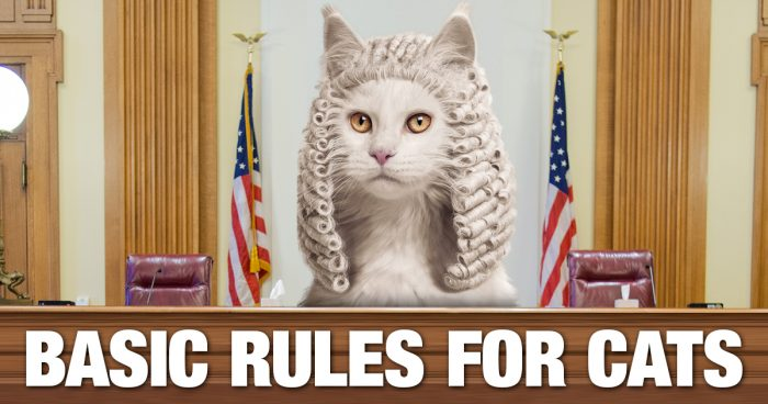 Thirteen basic rules for cats