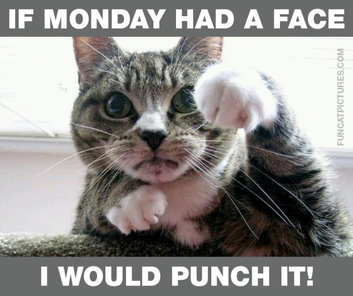 This cat shares my monday feelings