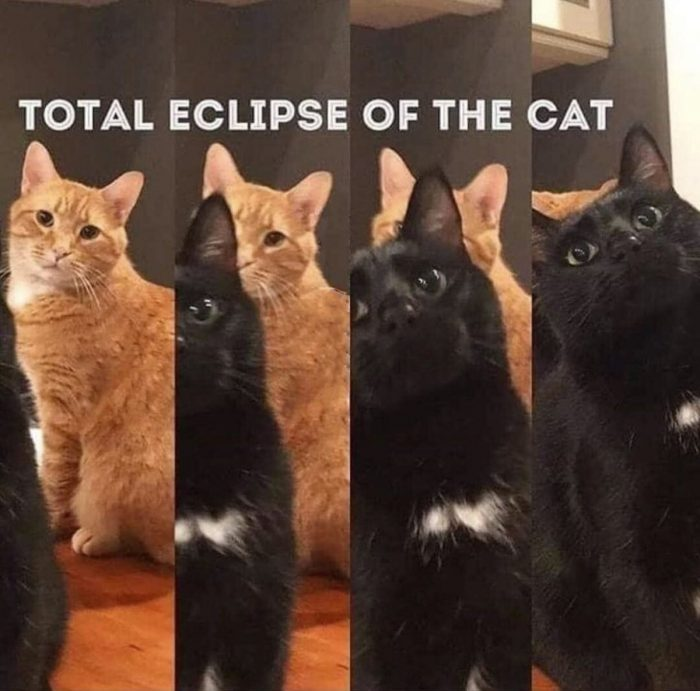 Some cats likes to steal the light