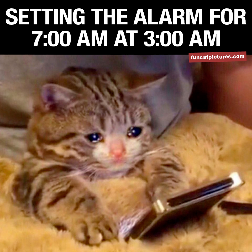 Tired cat with phone, setting the alarm