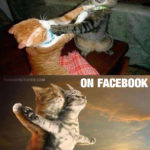Cats at home VS on Facebook