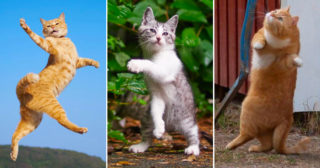 Twenty pictures proving that cats are the masters of dance!