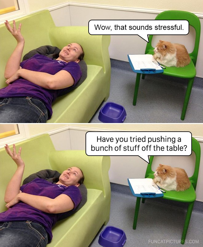 If cats were psychologists